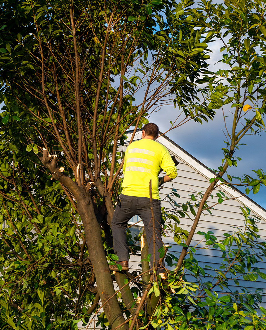 www.richtreeservice.com for tree removal